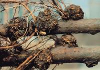 Mezőgazdasági mikrobiológia (növénykórtan) – Baktériumok