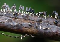 Mezőgazdasági mikrobiológia (növénykórtan) – Protozoa (Protozoonok)