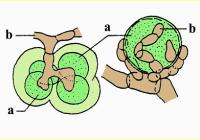 Zuzmók  biomonitorozása