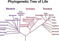 A gombák nevezéktana és rendszerezésük