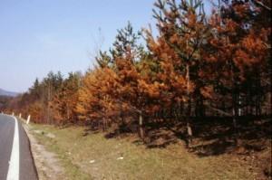 Sókár fákon